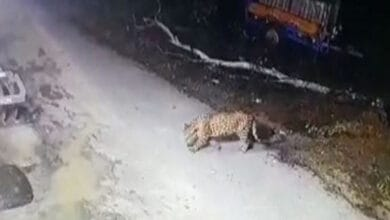 Uttarakhand: Leopard sighted in village along India-Nepal border