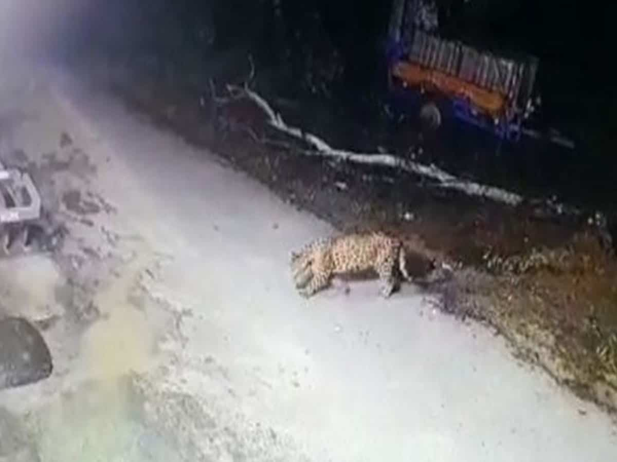 Uttarakhand: Leopard sighted in village along India-Nepal border