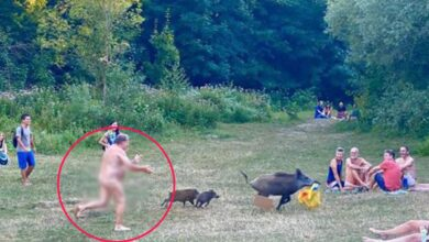 Photo of Naked German  chases down Wild Boar that stole his laptop
