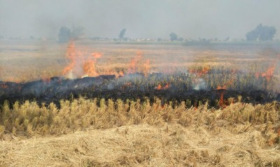 PIL in SC seeks ban on stubble burning in view of Covid-19