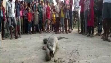 Photo of Python rescued from village in UP's Rampur