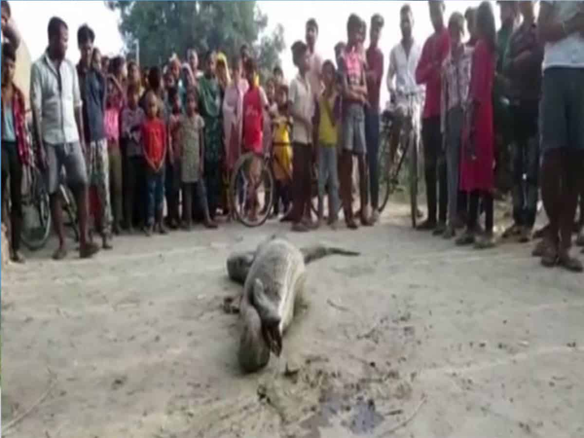 Python rescued from village in UP's Rampur