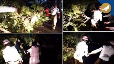 Photo of Tree falls at Salar Jung bridge, traffic cops clear the way