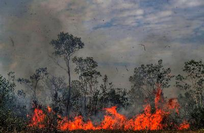 Sao Paolo forest fires up 109% in 2020