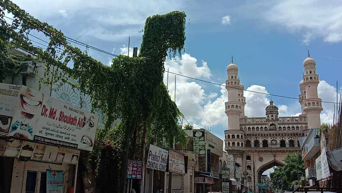 Creepers grow on electric poles and transformers in Hyderabad