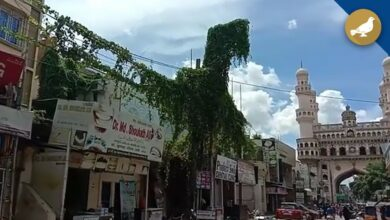 Photo of Creepers grow on electric poles and transformers in Hyderabad