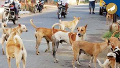 Photo of Hyderabad: Stray dogs, not just Corona is becoming menace to people