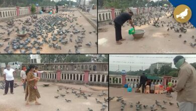 Photo of Hyderabad: Man feeding pigeons says, Peace of mind