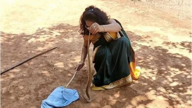 Photo of Woman rescues cobra donning saree; leaves twitterati amazed