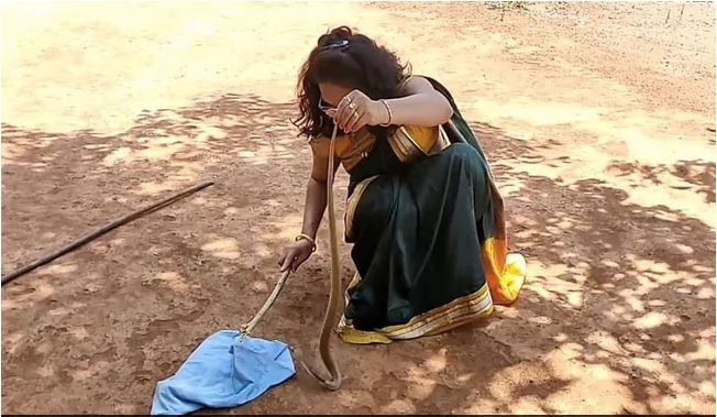 rescuing snake in saree