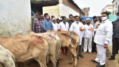 Photo of Govt debunks rumours of Lumpy Skin Disease spreading in cattle