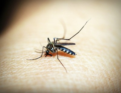 Delhi's anti-dengue campaign garners celebrity support