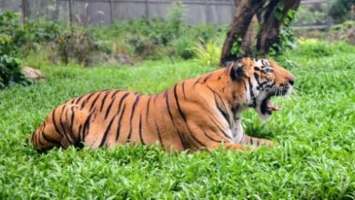Photo of Hindu activists oppose serving beef to animals in Guwahati Zoo