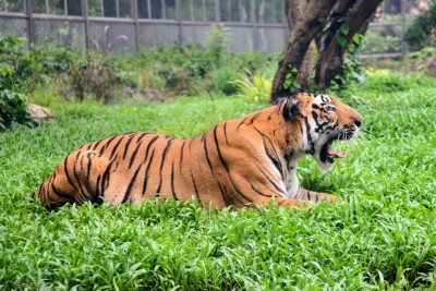 Hindu activists oppose serving beef to animals in Guwahati Zoo