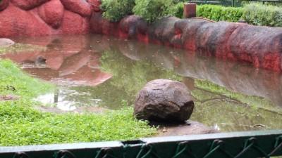 Hyderabad zoo shut due to waterlogging after rains