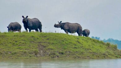 Photo of Kaziranga National Park to reopen on Oct 21