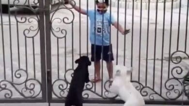 Photo of Watch: Little kid's dance moves in front of doggos is the best bhangra ever!
