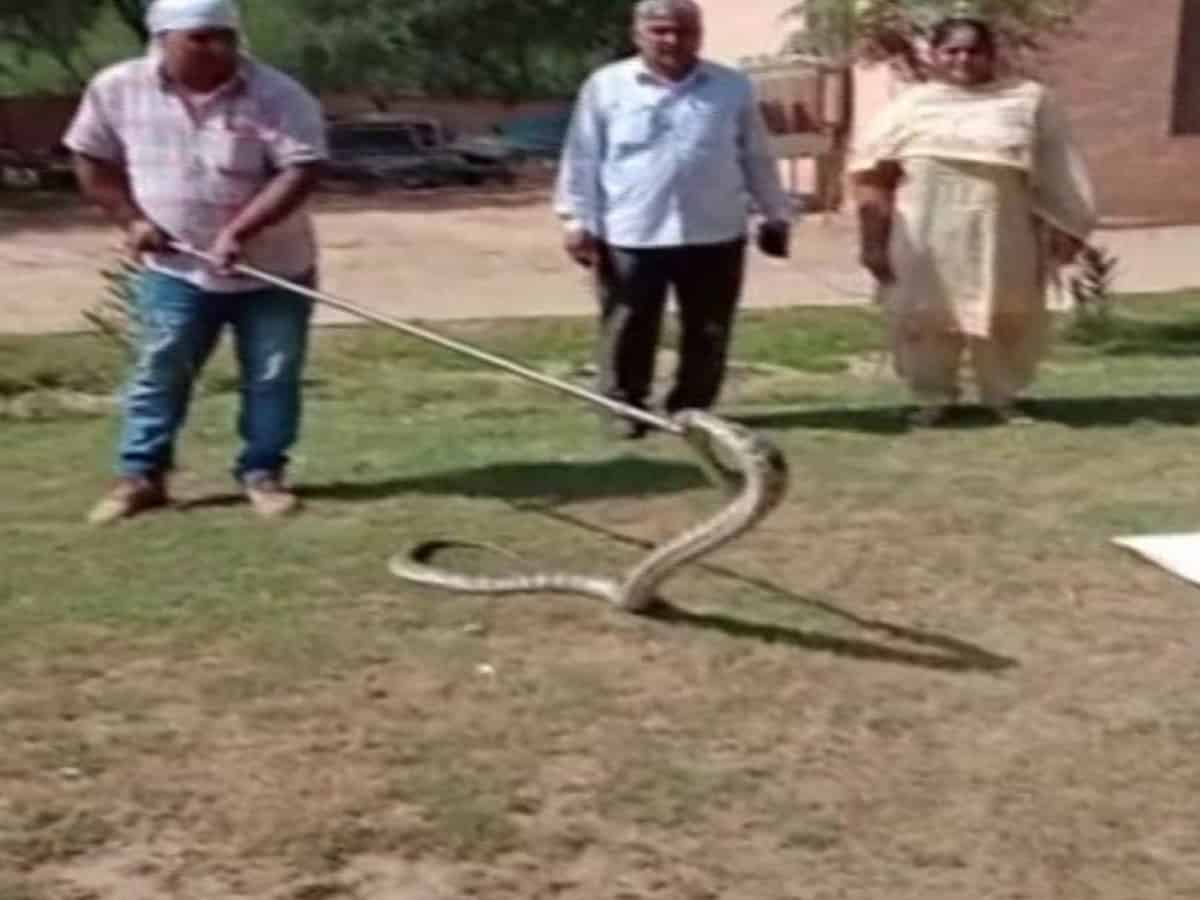 Haryana: 8-foot long python rescued by forest department from car in Hissar's auto market