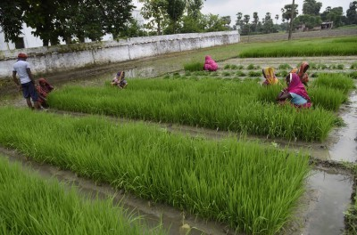 Paddy procurement in current season exceeds by 22.43%