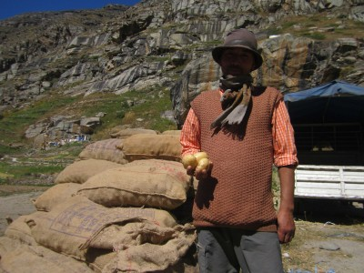 Potatoes of Himachal's cold deserts sell like hotcakes