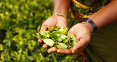 SL promotes Ceylon Tea with 'tea dyed' masks