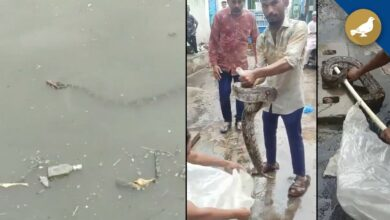Photo of Hyderabad rain: Snakes in flood water