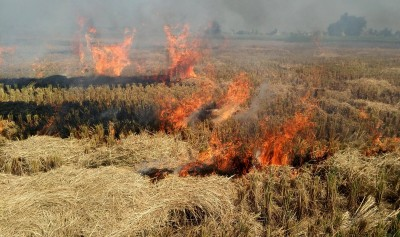 Stubble burning to add 26% to Delhi's air pollution: SAFAR