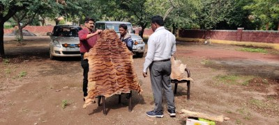 Tiger skin, claws seized from astrologer's house in Karnataka