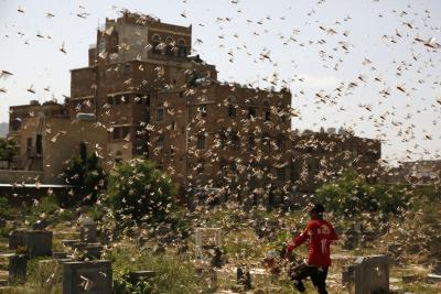 UN issues alert on new wave of desert locusts in Somalia