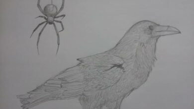 Photo of THE CROW AND THE SPIDER