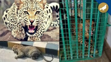Photo of Leopard trapped on Hyderabad outskirts