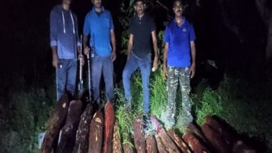 Police seizes 16 logs of red sanders in Andhra's Chittoor