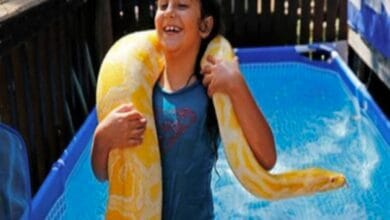Photo of Israeli child takes 11-foot pet python 'Belle' for swimming