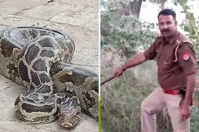 This inspector is a snake-catcher too