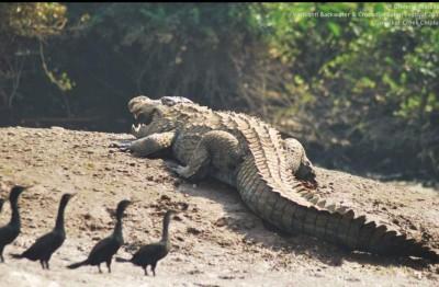 Croc comes calling at a Kerala home