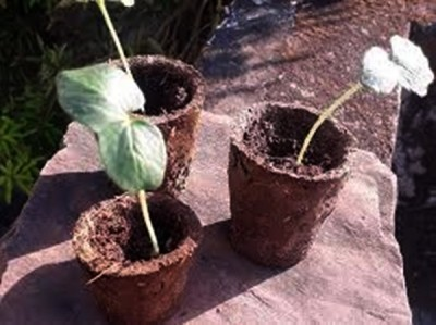 Lucknow's new initiative: Flower pots from cow dung