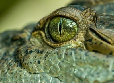 Massive 'swamp king' prehistoric crocodile identified in Australia