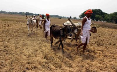 Odisha cabinet resolves to move Centre on MSP of all crops