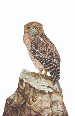 Owl injured by banned Chinese 'manja' saved