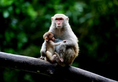 South India's first rehabilitation centre for monkeys comes up in Telangana