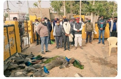 After 100 crows, peacocks other birds found dead in Nagaur
