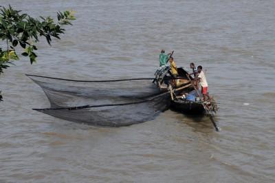 CMFRI cautions fishermen on oil sardines