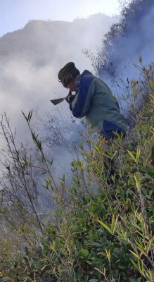 Dzukou Valley wildfire 'almost under control', efforts to continue