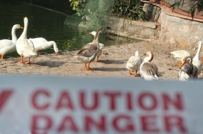 Gurugram administration issues advisory amid spread of bird flu