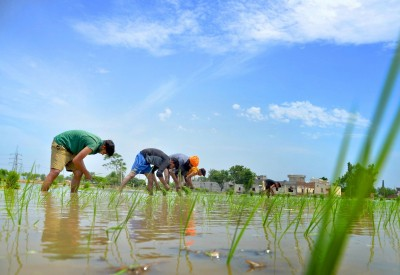 India rises to the occasion as global rice stock runs short