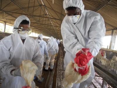 No case of bird flu in Telangana but alert sounded