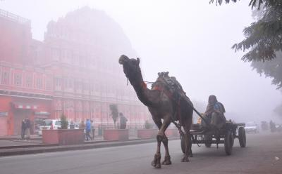 Rajasthan: Drizzle brings respite from cold wave