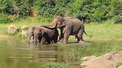 Wild elephants kill pet pachyderm in Jharkhand