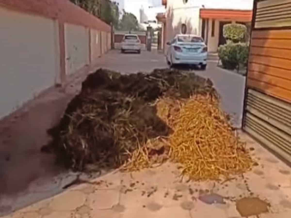 Punjab: Protesters unload dung-laden trolley outside BJP leader's house