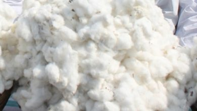 Pakistan's Textile Ministry asks Govt to lift ban on import of cotton from India